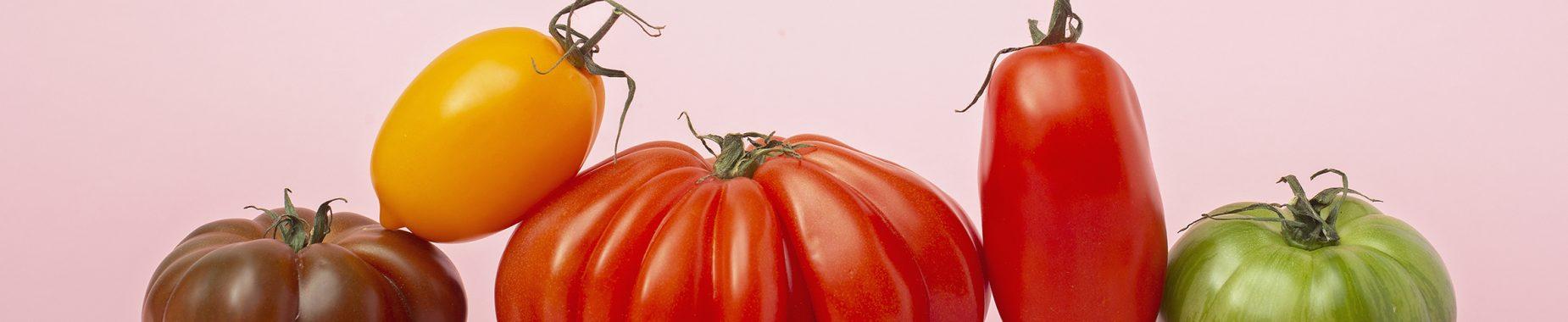 Fem tomater i forskellige farver på række