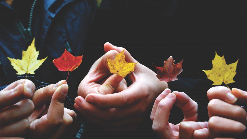 børn holder små blade i deres hænder