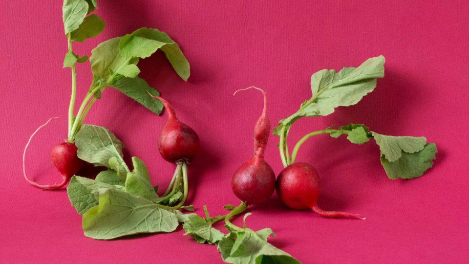 Fire nye projekter illustreret af fire rødbeder